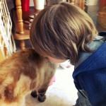 Le chat de belle-maman s'appelle Pétrus