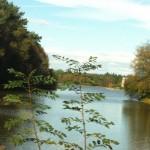 Ma soif de paysages canadiens ou scandinaves a trouvé une douce consolation du côté de Paimpont... Si vous avez de jolis lacs à me conseiller, je vous supplie de commenter cet article !