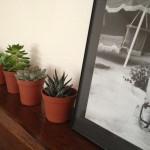 Des petites plantes grasses dont je vais assurer la survie à n'importe quel prix et la jambe de Marylin, cette petite coquine.