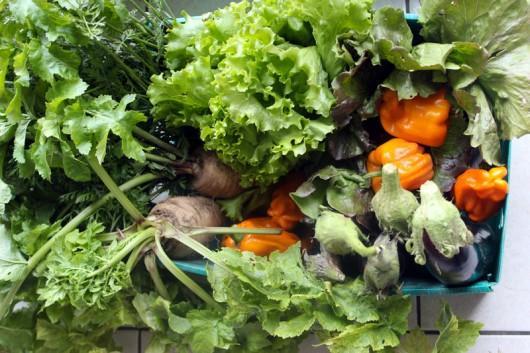 légumes bio Goven