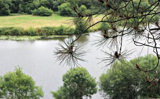vue du belvedere de l'île aux Pies