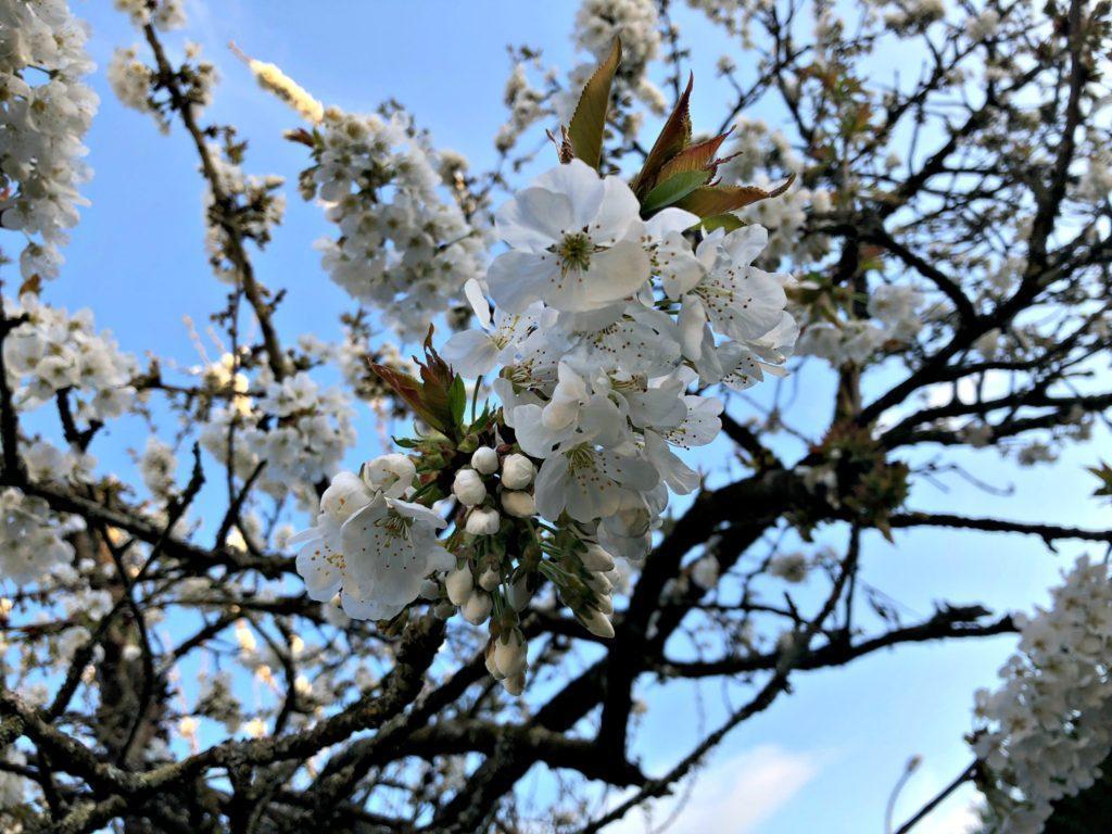 Le printemps en Bretagne