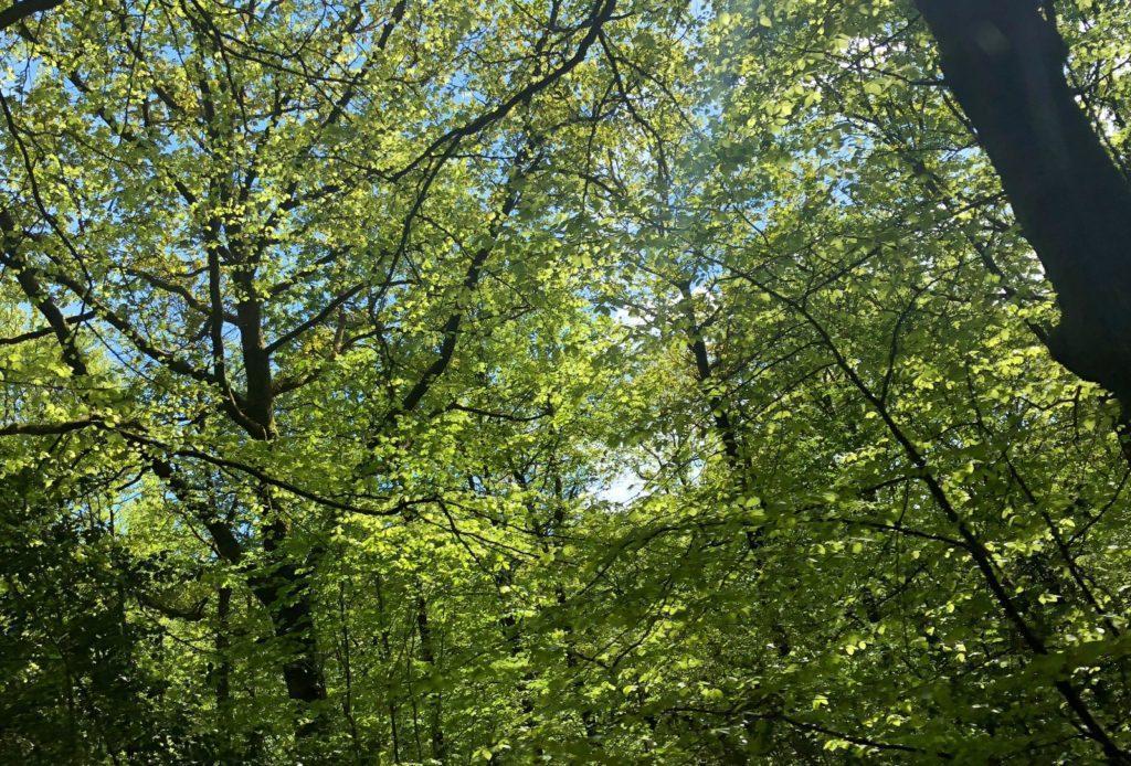 Forêt de Concoret